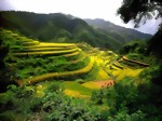 china_rice_terraces_-_guangxi-medium.jpg